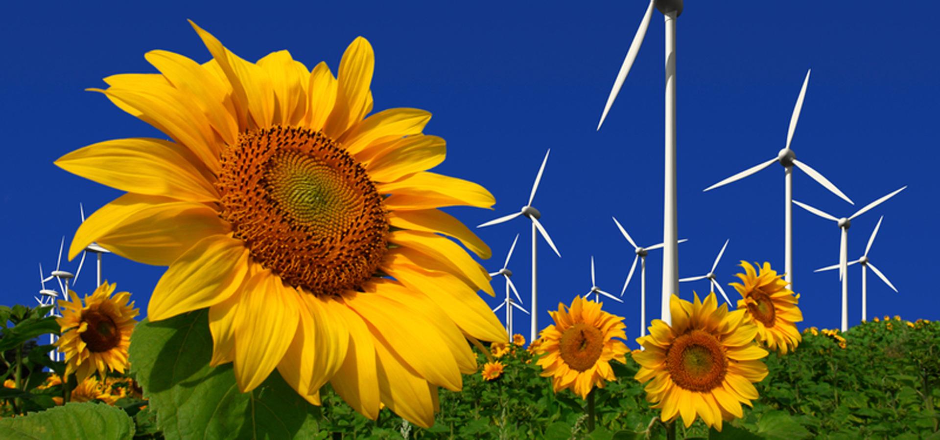 Umweltschutz-vorantreiben